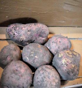 Картошка из деревни