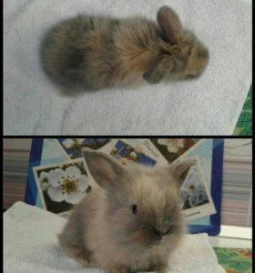 Декоративный крольчонок