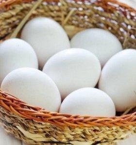 Яйцо куриное, деревенское