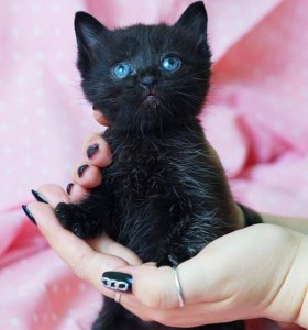 Чёрный котёнок!