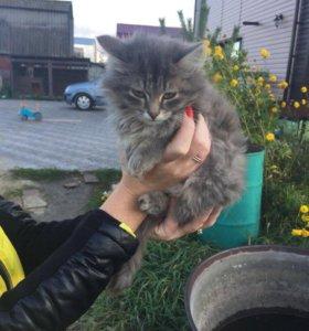 Отдам 2 котят. Близнецов мальчик и девочка