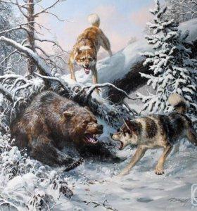 Продаются щенки якутской охотничьей лайки.