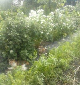 Шикарные котята ищут дом!!