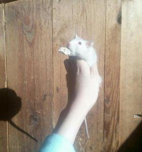 Крыса мальчик