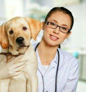 Ассистент ветеринарного врача