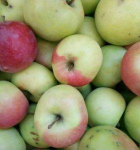 Яблоки,сочные,сладкие.