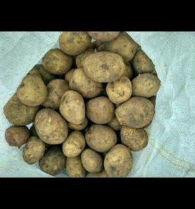 Домашняя картошка