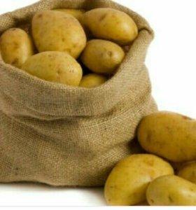 Картошка из Олекминска