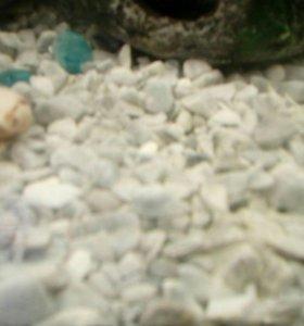 Мраморная крошка, грунт