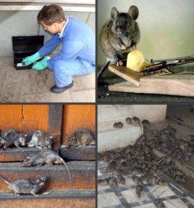 Крысы мыши