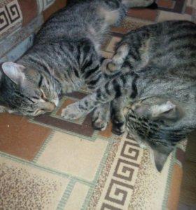Котята 11 месяцев