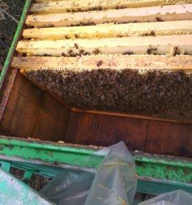 Цветочный мёд, сотовый мёд, доставка
