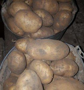 Картошка без нитратов