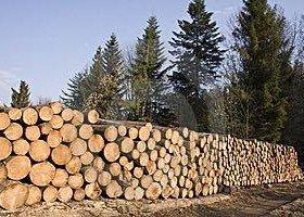 Продам лес кругляк хвоя
