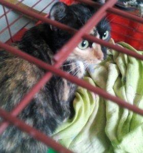 Кошка черепахового окраса - на удачу :)
