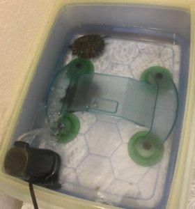 Черепахи и черепашник