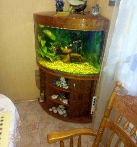 Аквариум 200 л. с рыбками