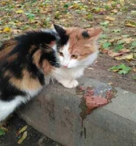 Молодая кошка на счастье
