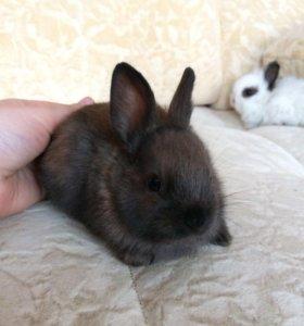 Кроликии