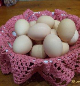 Яйцо куриное и перепелиное.Мясо домашней птицы