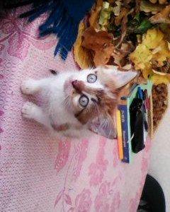 Котёнок ищет дом