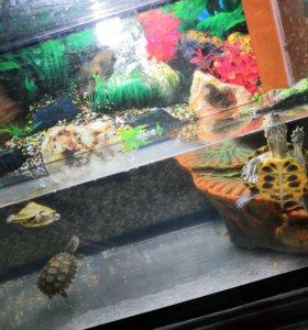 Аквариум вместе с черепахами