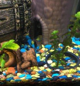 Грунт аквариумный