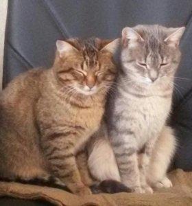 Кошки 2шт