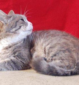 Самая уютная Кошечка ждет приглашения на пмж)))