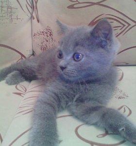 Котёнок девочка .