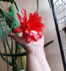 Укорененный отросток цветка