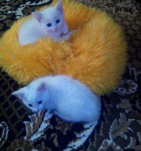 Две беленькие девочки . Два месяца .