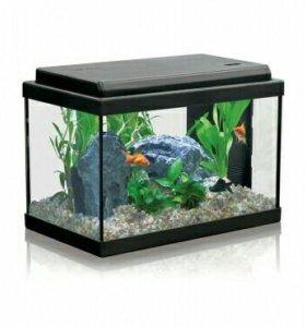 Новый аквариум Aquatlantis40