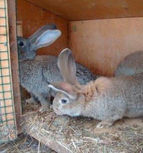 продам кроликов 6 месяцев ценна договорная