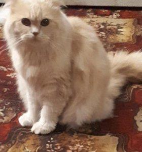 """Кот """"Пушок"""" в добрые руки"""