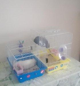Крысы (молодые самцы)+клетка+мелочи