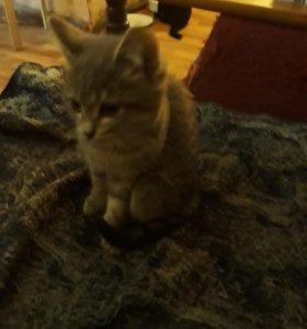 Кошечка очени игривая