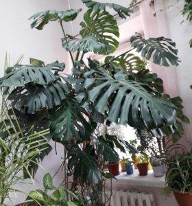 Томск оптовая база цветов, заказ цветов верхние киги