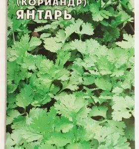 Семена 🌿 Кинза (кориандр) «Янтарь»