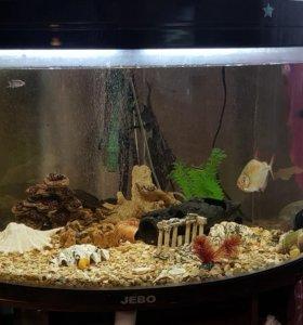 Продается аквариум с рыбками и совсем навесным