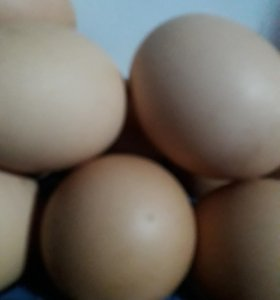 Продается Домашние Свежие Яйца