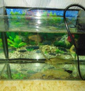 Продам аквариум с каркасем