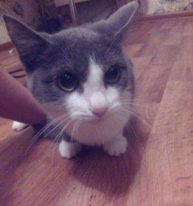 Кошки, отдам котят в хорошие руки