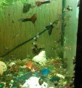 Аквариум со всем содержимым рыбки и улитки.