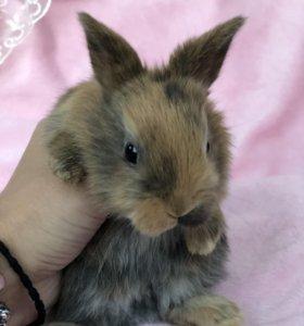 Породистые карликовые крольчата 🐇💜