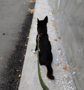 Выгуливаю собак