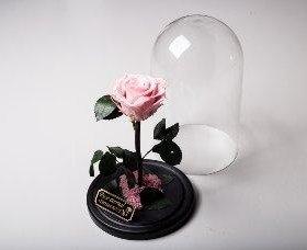 Живая стабилизированная роза