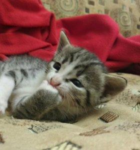 Котята в добрые руки❤