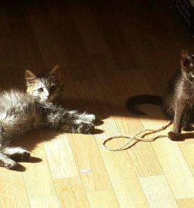 Прекрасные и разные котики ищут дом