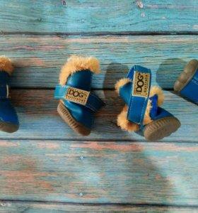 Обувь для мелких пород собак
